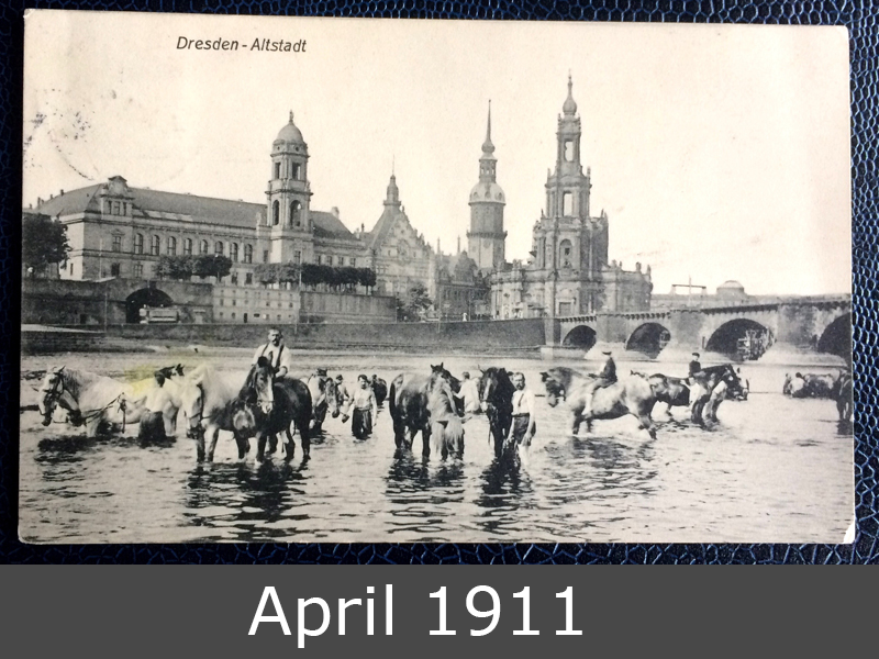 Project Postcard April 1911 Dresden River Elbe horses front