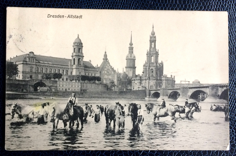Project Postcard April 1911 Dresden River Elbe horses